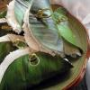folha da bananeira circular