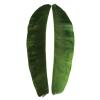 folha-da-bananeira-produto